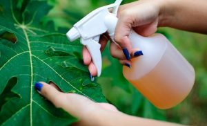 How To Get Rid Of Bugs In Garden? Find Here!