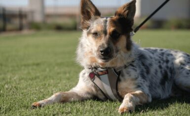 Dog care tips for taking care of your pet treats and tidbits – attempt crude products of the soil.
