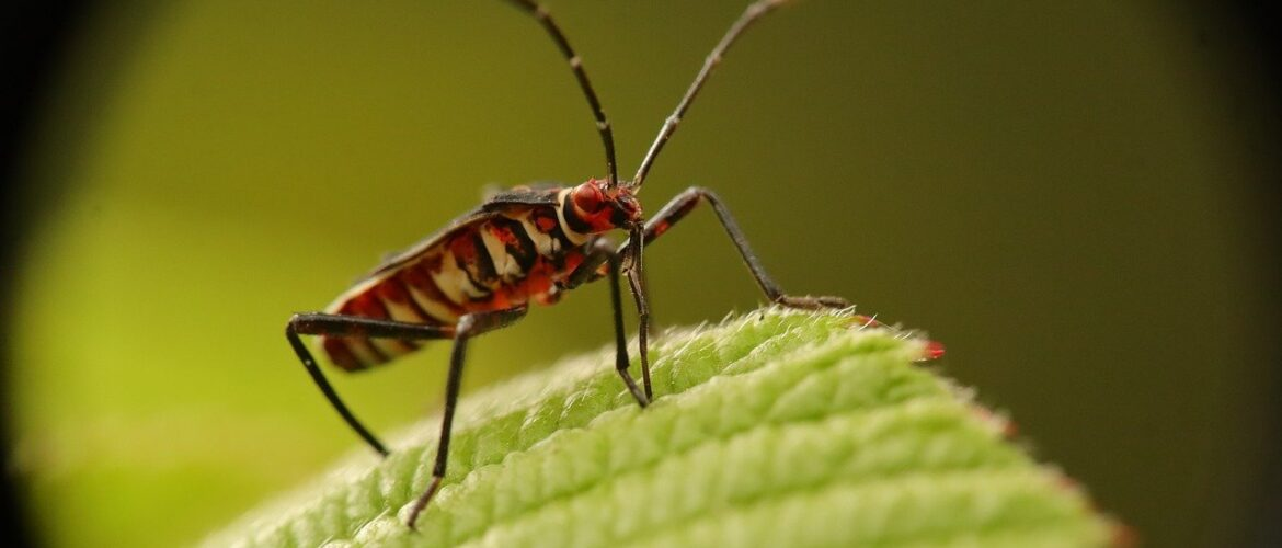 Aardwolf Pestkare- Authentic Bed Bug Treatment Service