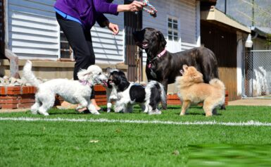 Dog Daycare In Rockledge, FL For The Services Which Your Doggie Needs
